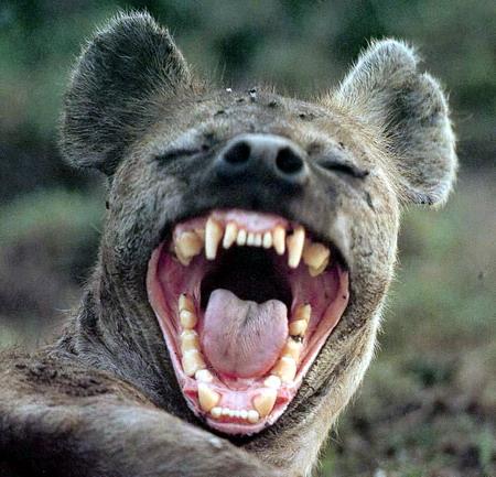 http://bellaciao.org/fr/IMG/jpg/souriez-hyene.jpg